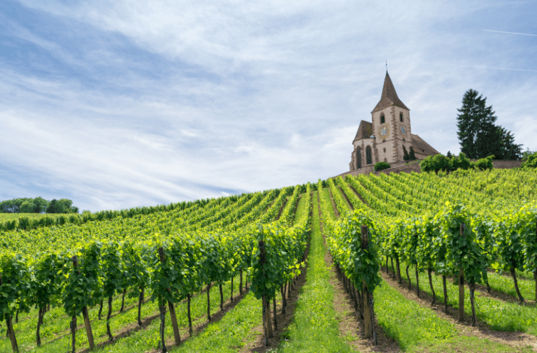 French vineyards Finding France