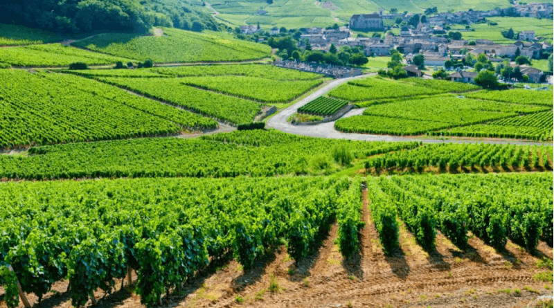 French Vines Finding France