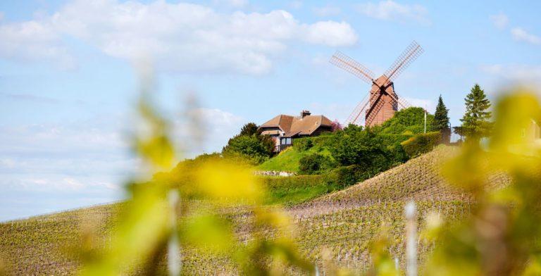 Pomenade-dans-les-vignes walk in vineyards Finding France