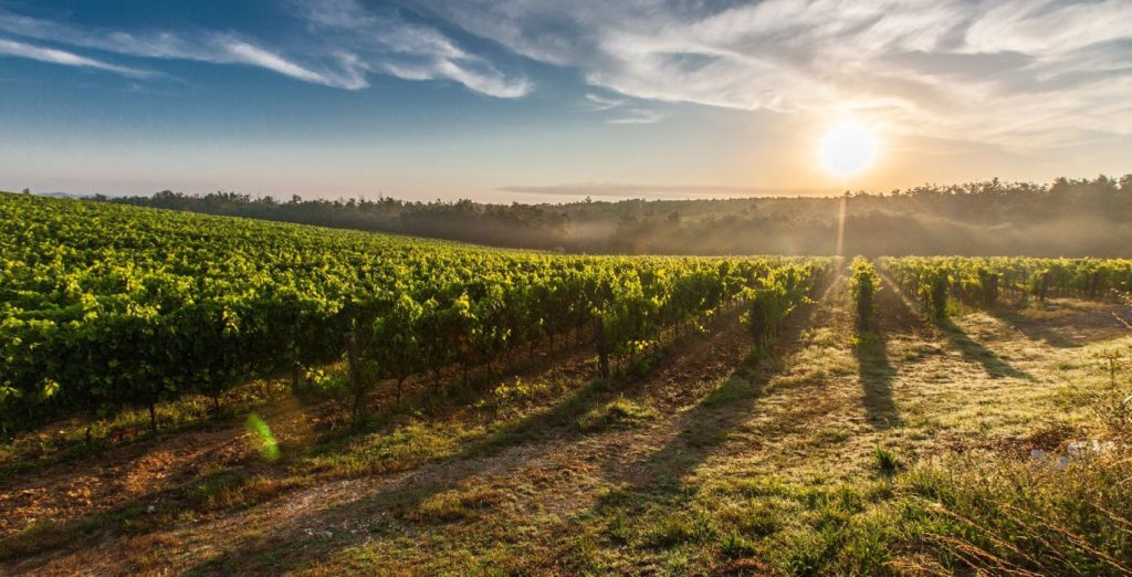 Bordeaux vineyards Finding France